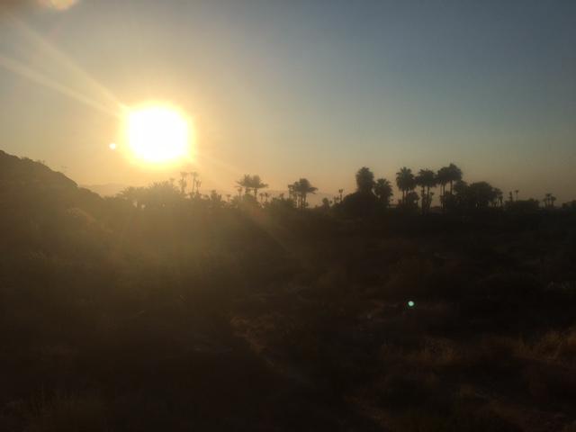 palmspringssun